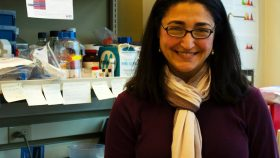Scientist Alexis Kaushansky in her lab at the Center for Infectious Disease Research